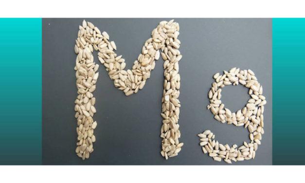 Magnesium – Nerven wie Drahtseile