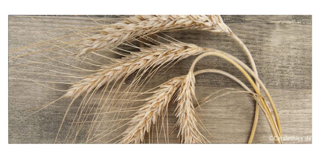 Weizen und Gluten - wie schädlich ist das?