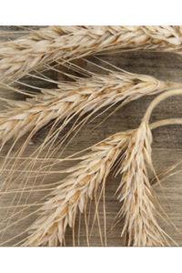 Ist Getreide schädlich für Dich?