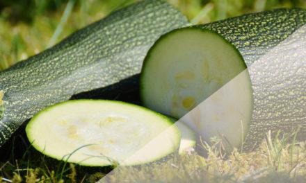 Zucchini – perfekt zum Kombinieren
